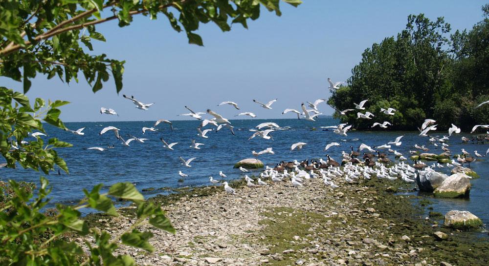 Put-in-Bay BeachBirds Feature